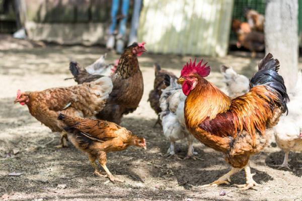 Sav scorte agrarie - animali