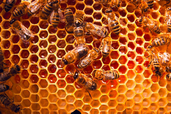 Sav scorte agrarie - apicultura