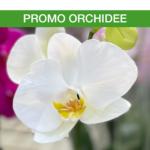 Offerta SAv orchidee